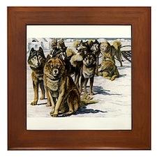 Sled Dog Husky Portrait Framed Tile