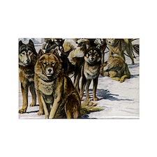Sled Dog Husky Portrait Rectangle Magnet