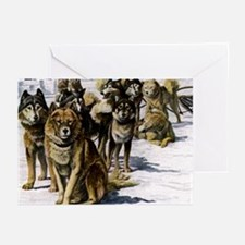 Sled Dog Husky Portrait Greeting Cards (Package of