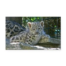 Baby Snow Leopard Rectangle Car Magnet