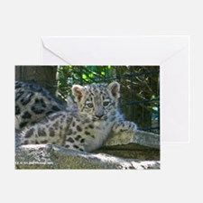 Baby Snow Leopard Greeting Card