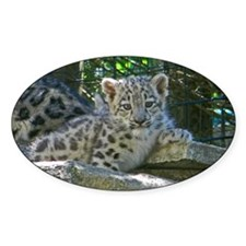 Baby Snow Leopard Decal