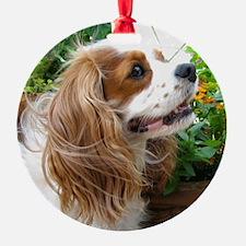 Dexter The Dog1 Ornament