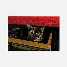 Kitten hiding in sock drawer Rectangle Magnet