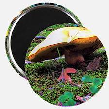 Yellow Mushroom Magnet