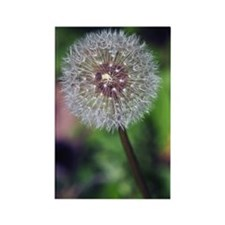GreetingCard_Flower_1 Rectangle Magnet