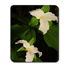 GreetingCard_Flower_2 Mousepad