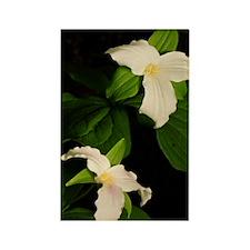 GreetingCard_Flower_2 Rectangle Magnet