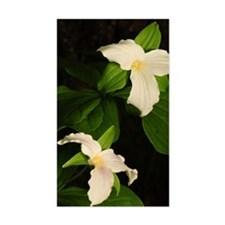 GreetingCard_Flower_2 Decal