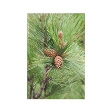 GreetingCard_PineCone_1 Rectangle Magnet