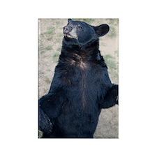GreetingCard_Bear_1 Rectangle Magnet
