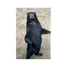 GreetingCard_Bear_3 Rectangle Magnet