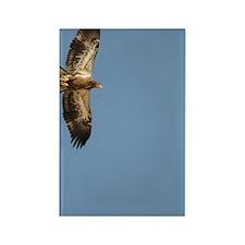 GreetingCard_Eagle_3 Rectangle Magnet