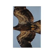 GreetingCard_Eagle_2 Rectangle Magnet