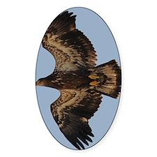 GreetingCard_Eagle_2 Decal