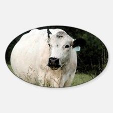 British White cow at Pasture - #3 Sticker (Oval)