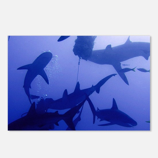 Caribbean Reef Sharks Postcards (Package of 8)