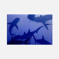 Caribbean Reef Sharks Rectangle Magnet