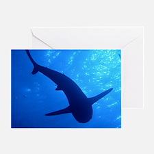 Caribbean Reef Shark Greeting Card