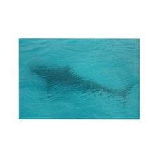 Tiger Shark 23 x 35 Print Rectangle Magnet