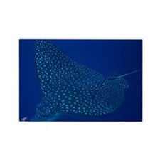 Spotted Eagle Ray 23 x 35 Print Rectangle Magnet