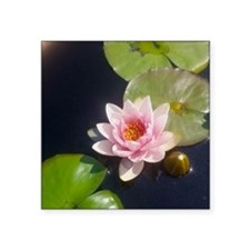 """Pink Water Lily Square Sticker 3"""" x 3"""""""