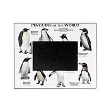 Penguins of the World Picture Frame
