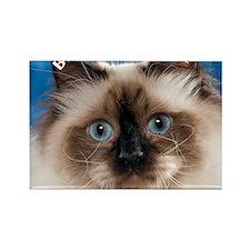 Birman Cat Magnet Rectangle Magnet