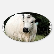 British White Cow at Pasture Sticker (Oval)