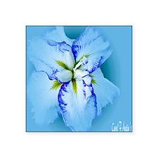 "Iris in Blue Mist Square Sticker 3"" x 3"""