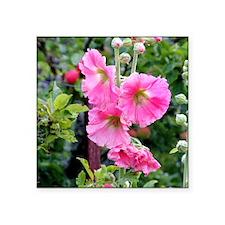 "Notecard---Hollyhock-Pink Square Sticker 3"" x 3"""