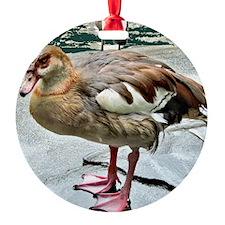 Wet Duck Ornament