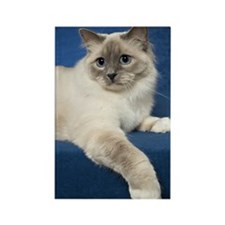 Birman Cat Note Card Rectangle Magnet
