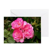 Rose, pink and white Greeting Card