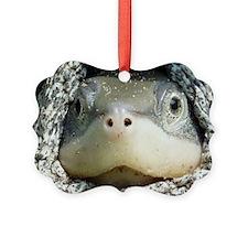 Diamondback Terrapin turtle Ornament