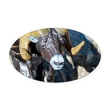 "Detail of my Bronze ""Black Hills B Oval Car Magnet"