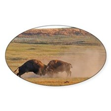 Bulls Clash in Wind Cave National P Decal
