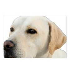 Yellow Lab Head Postcards (Package of 8)