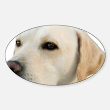 Yellow Lab Head Decal