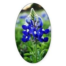 Lonestar Bluebonnet Decal