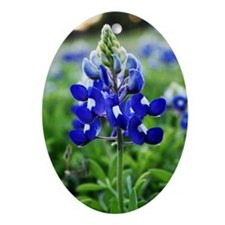 Lonestar Bluebonnet Oval Ornament