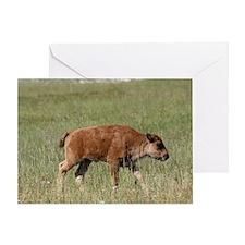 Baby Buffalo Greeting Card