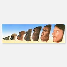 Human evolution, artwork Bumper Bumper Sticker