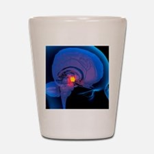 Hypothalamus in the brain, artwork Shot Glass