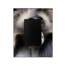 Gelada Baboon Picture Frame