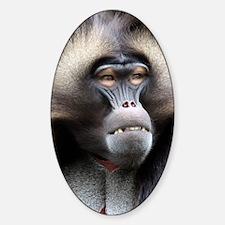 Gelada Baboon Decal