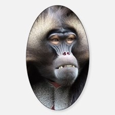 Gelada Baboon Sticker (Oval)