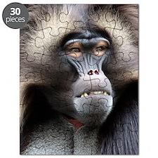 Gelada Baboon Puzzle