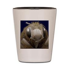 Honey bee, SEM Shot Glass