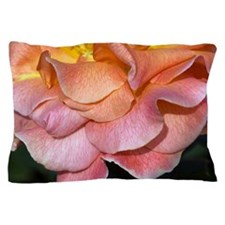 Hybrid tea rose (Rosa 'Can-Can') Pillow Case